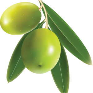 Olives-PNG-Image-97221-FILEminimizer.png