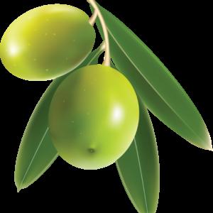 Olives-PNG-Image-97221-FILEminimizer.png